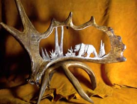 Large Moose Antler Carving