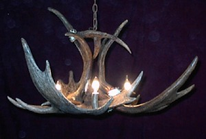 Moose Antler Chandelier To Buy